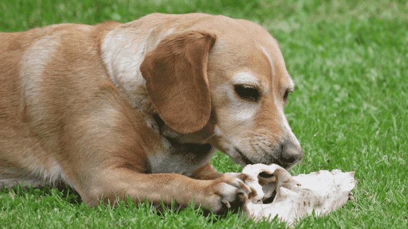 狗狗乳腺炎症状_布偶猫血统证书怎么看 - 爱宠