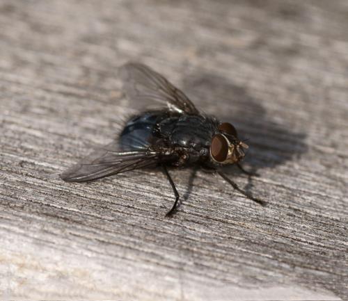 蛆如何变成苍蝇_苍蝇是怎么形成的 - 发条视频