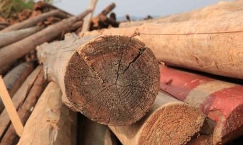 鲜木头煮多长时间防裂