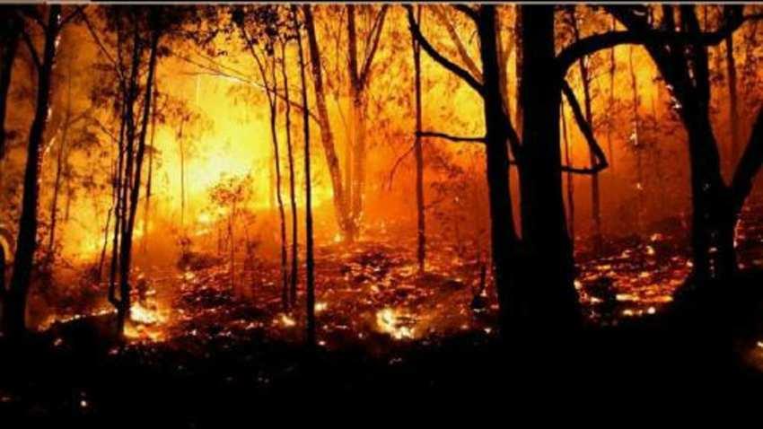 森林防火的知识有哪些