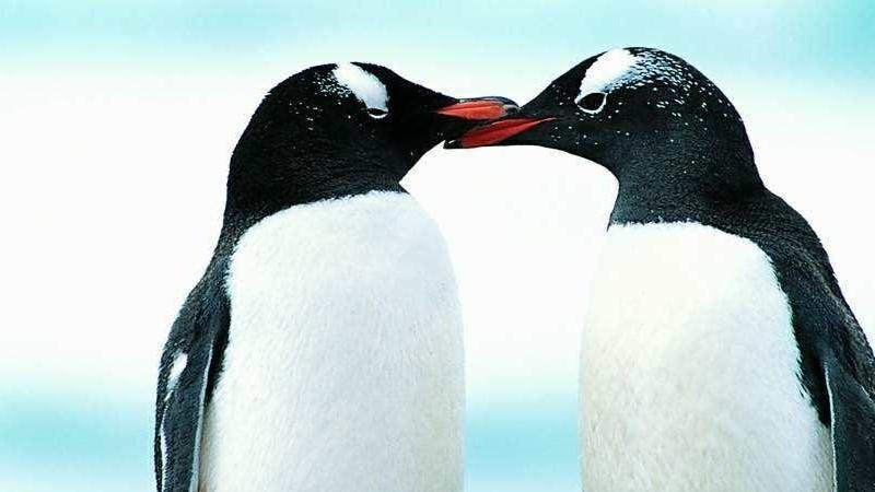 人为什么不吃企鹅肉