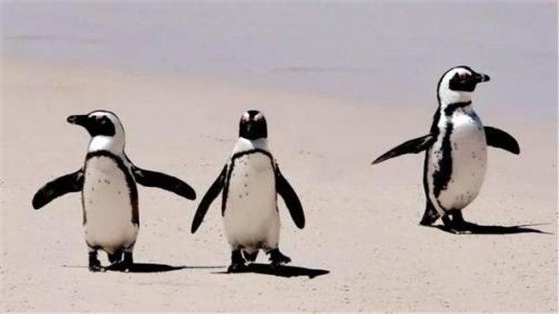 非洲企鹅生活在哪里