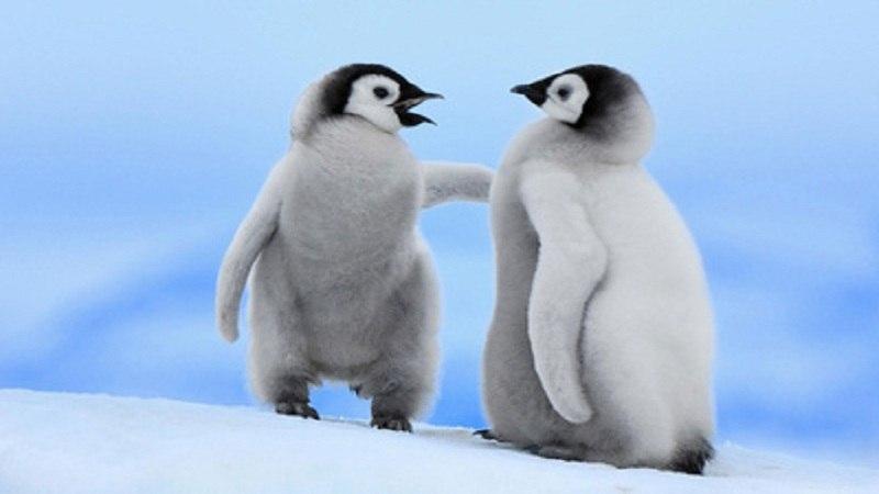 南极代表生物是什么