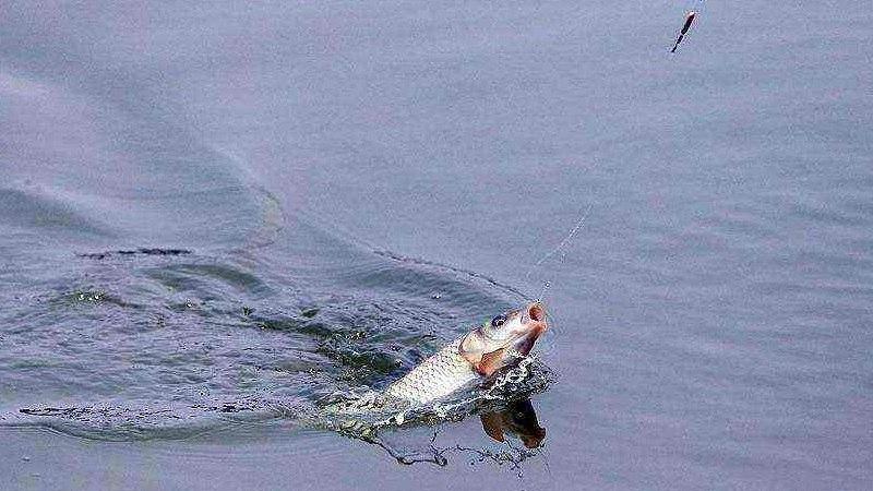 涨水鱼落水虾什么意思