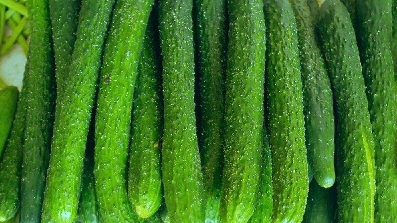 青瓜可以生吃吗