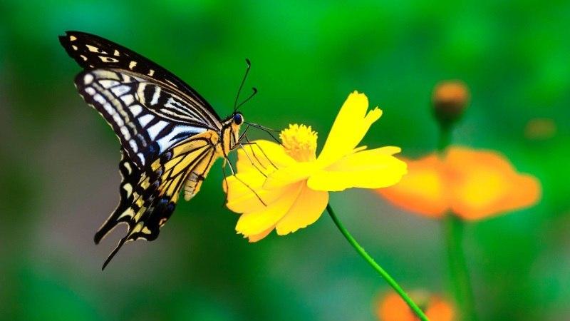 破茧成蝶,涅槃重生是什么意思